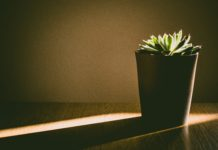 plant minimalisme
