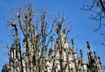Kastanjes bij de Sint Jan in Den Bosch